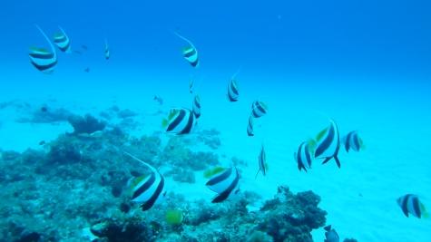 undersea walk (68)